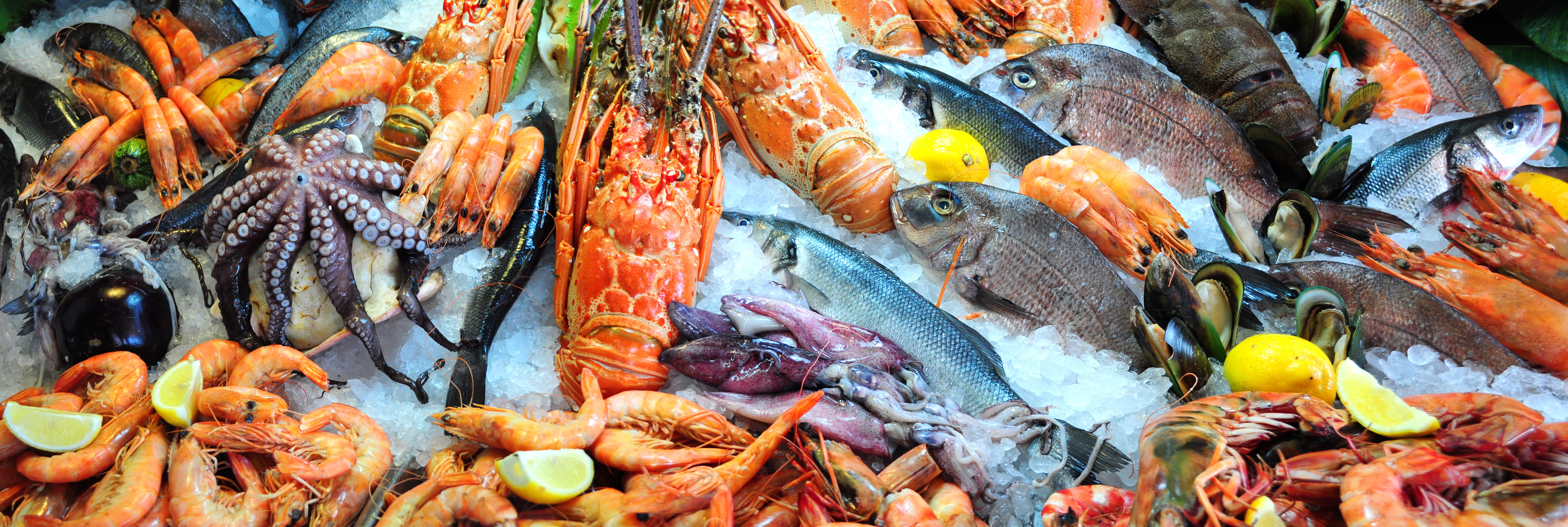 Ensure Traceability In Your Seafood Supply Chain With Tech